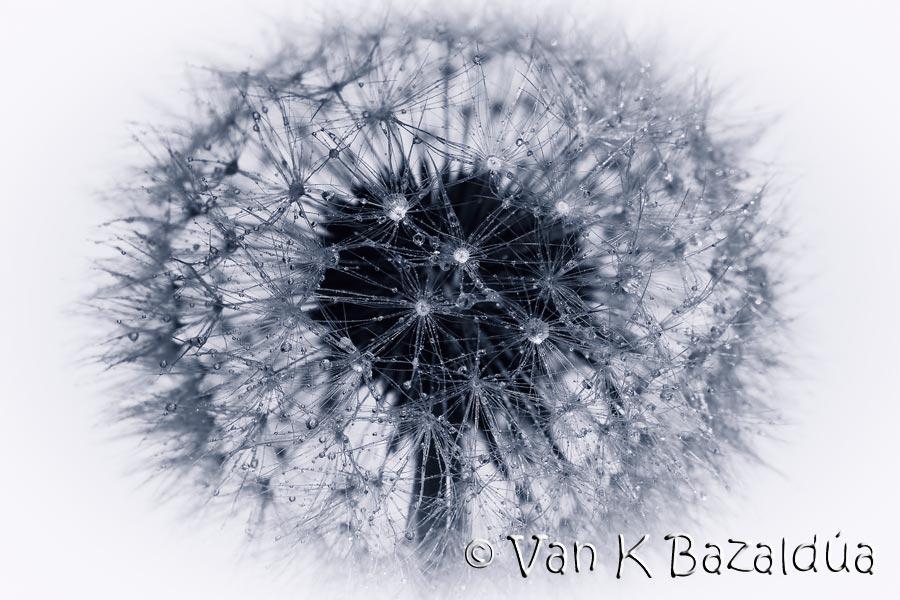 Image Slide Puzzle, imagen de Van K Bazaldúa